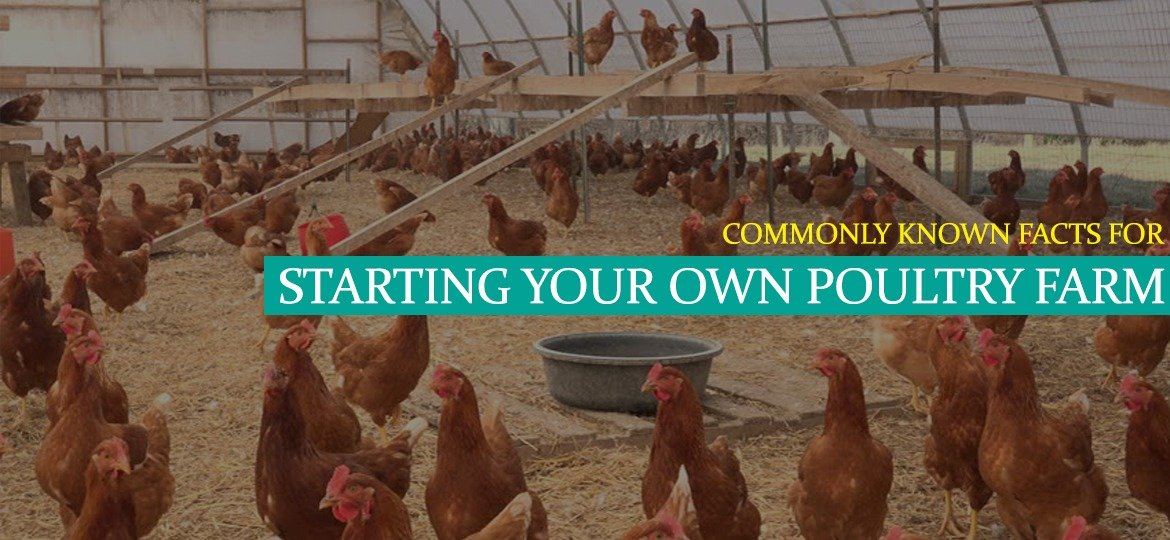Are you planning to start your own poultry farm